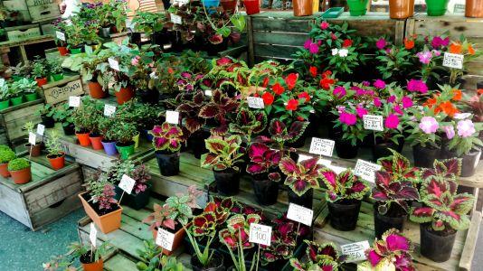 Montevideo - Feria Fleurs