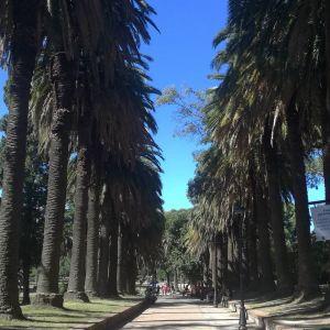Montevideo - Parque Rodo 2